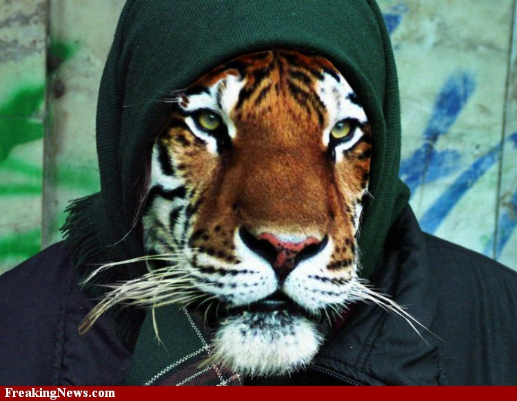 tiger-in-street-clothes-44899.jpg