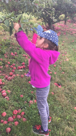 We shall leave no apple unpicked!